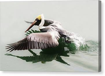 Skimming Across The Water Canvas Print by Paulette Thomas