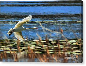Flying Swan Canvas Print - Skimming by Lois Bryan