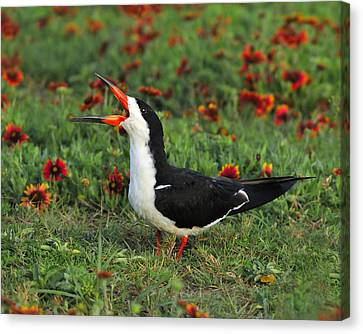 Skimming Through The Garden Canvas Print by Tony Beck