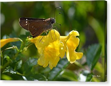 Canvas Print featuring the photograph Skipper Butterfly 2 by Debra Martz