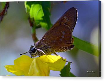 Canvas Print featuring the photograph Skipper Butterfly by Debra Martz