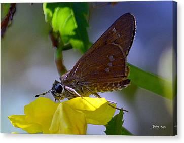 Skipper Butterfly Canvas Print by Debra Martz