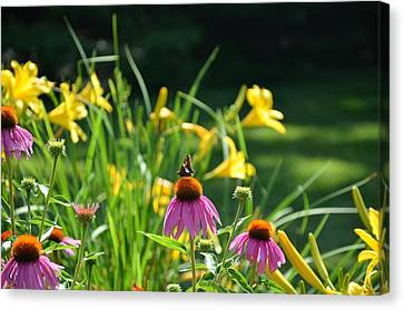 Skipper In The Flowers Canvas Print