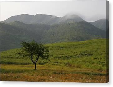 Skc 0053 A Solitary Tree Canvas Print by Sunil Kapadia