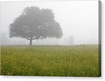 Skc 0056 Tree In Fog Canvas Print by Sunil Kapadia