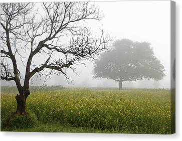 Skc 0058 Contrasty Trees Canvas Print