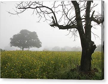 Skc 0060 Framed Tree Canvas Print by Sunil Kapadia