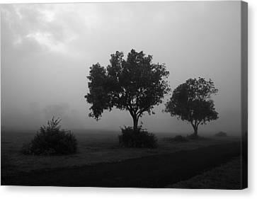 Skc 0074 A Family Of Trees Canvas Print by Sunil Kapadia