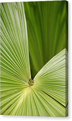 Skc 0691 The Paths Of Palm Meeting At A Point Canvas Print by Sunil Kapadia