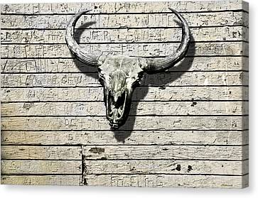 Skull And Horns Canvas Print by Larry Butterworth