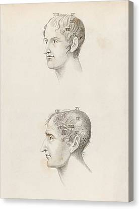 Skull Comparisons In Phrenology Canvas Print by King's College London