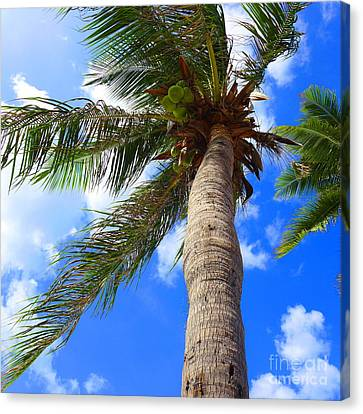 Huahin Canvas Print - Sky And The Coconut Tree by Juan Jiang