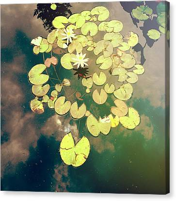 Sky Dance Canvas Print by Olivia StClaire