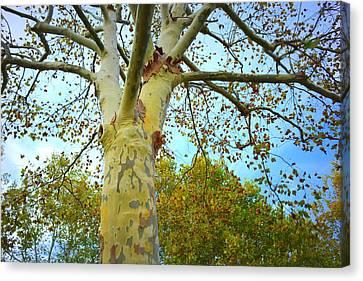 Sky High Canvas Print by Kathy Barney