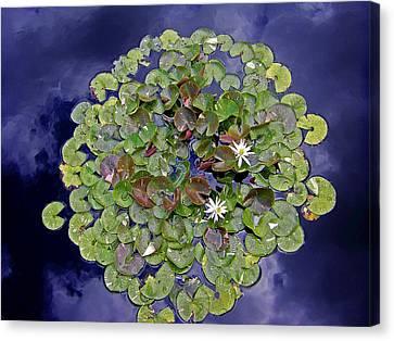 Sky Lilies Canvas Print by Zafer Gurel