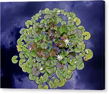 Sky Lilies Canvas Print