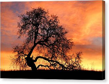 Canvas Print featuring the photograph Sky On Fire by Priya Ghose