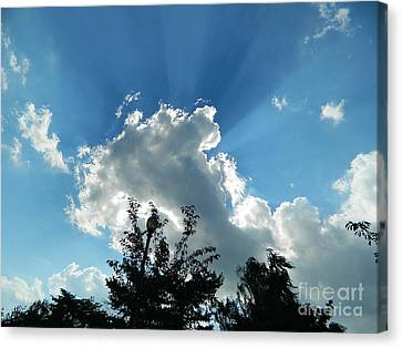Canvas Print featuring the photograph Sky Phenomenon At Hains Point by Emmy Marie Vickers