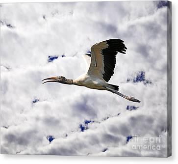 Sky Stork Canvas Print by Al Powell Photography USA