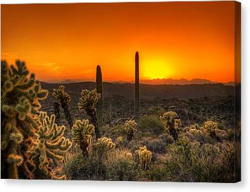 Skyfire Cholla Canvas Print