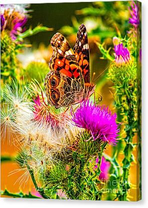 Skyline Butterfly Canvas Print