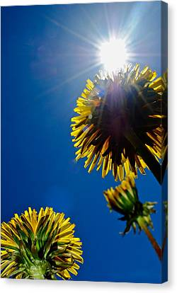 Masterful Canvas Print - Skyskrapers by Frozen in Time Fine Art Photography