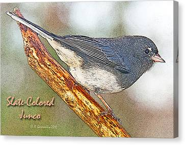Canvas Print featuring the photograph Slate-colored Junco Poster Image by A Gurmankin