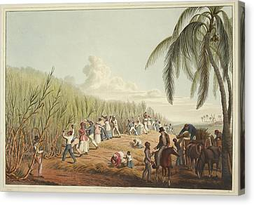 Slaves Cutting The Sugar Cane Canvas Print by British Library