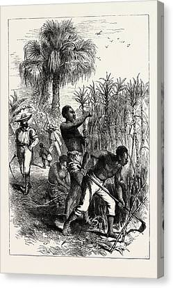 Plantation Canvas Print - Slaves Working On A Plantation, United States Of America by American School