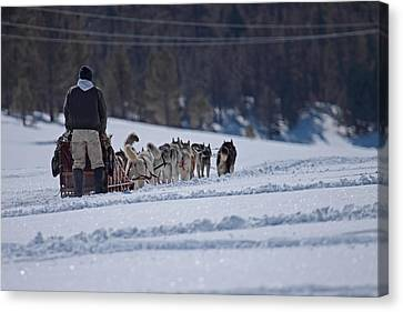 Sled Dog  Canvas Print
