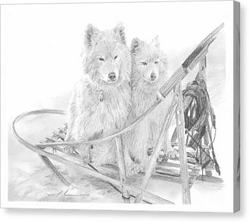 Sled Dogs Riding In Sled Pencil Portrait Canvas Print by Mike Theuer