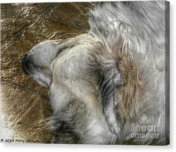 Mary King Canvas Print - Sleeping Bella by Mary  King