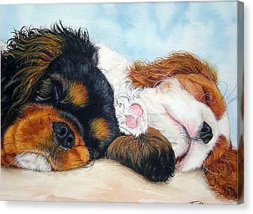 Sleeping Cavalier Puppies Canvas Print by Toulla Hadjigeorgiou