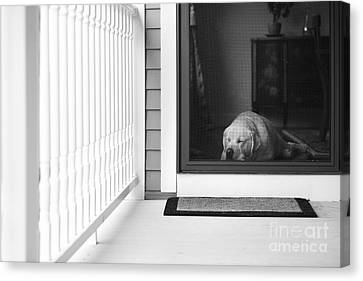 Screen Doors Canvas Print - Sleeping Dog by Diane Diederich