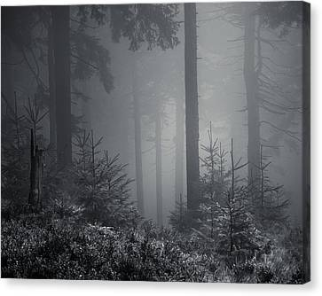 Sleeping Forest   Canvas Print by Jaromir Hron