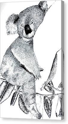 Koala Canvas Print - Sleeping Koala by Janel Bragg