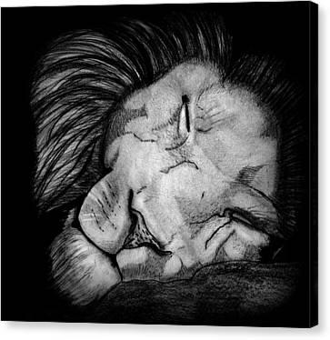 Sleeping Lion Canvas Print by Saki Art