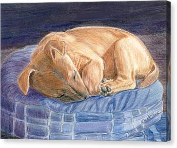 Sleeping Puppy Canvas Print by Ruth Seal