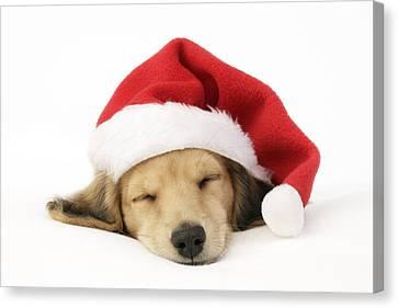 Sleeping Santa Puppy Canvas Print