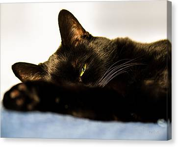 Sleeping Cat Canvas Print - Sleeping With One Eye Open by Bob Orsillo