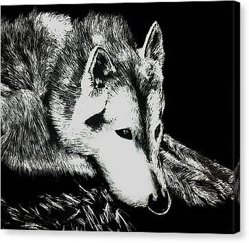 Canvas Print featuring the painting Sleeping Wolf by Shabnam Nassir