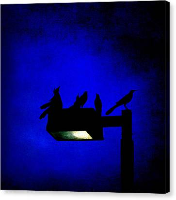 Sleepless At Midnight Canvas Print by Trish Mistric