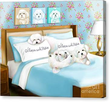 Sleeps With Maltese Canvas Print