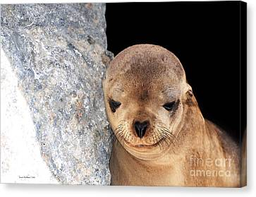 Canvas Print featuring the photograph Sleepy Baby Sea Lion by Susan Wiedmann
