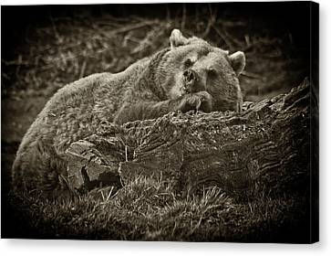 Sleepy Bear Canvas Print