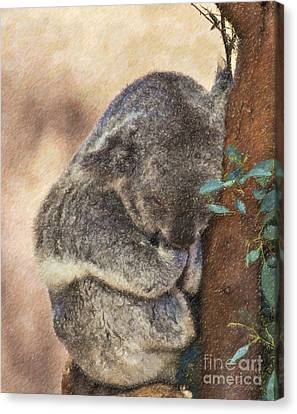 Sleepy Koala Canvas Print by Liz Leyden
