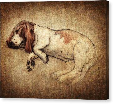Sleepy Penny Canvas Print by Kyle Wood