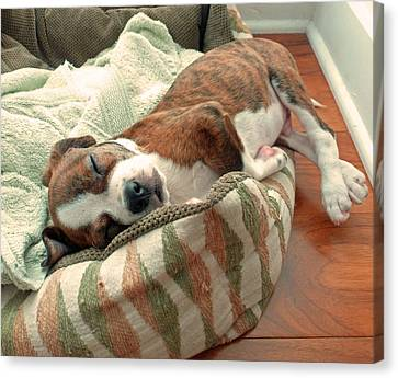 Sleepy Puppy Canvas Print