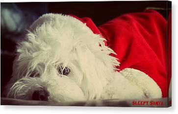 Doggy Cards Canvas Print - Sleepy Santa by Melanie Lankford Photography