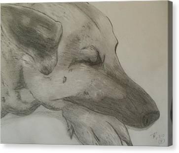 Sleepy Shepherd Canvas Print by Thomasina Durkay